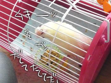 puchan2.jpg
